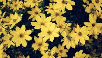Analysing Rahu Mahadasha – psychologically astrology